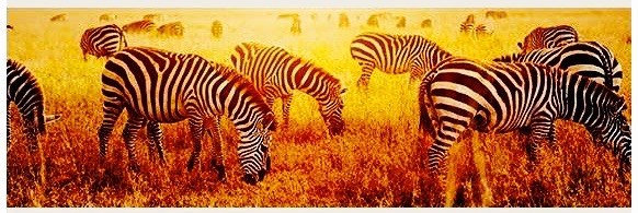 the-men-who-speak-to-zebra